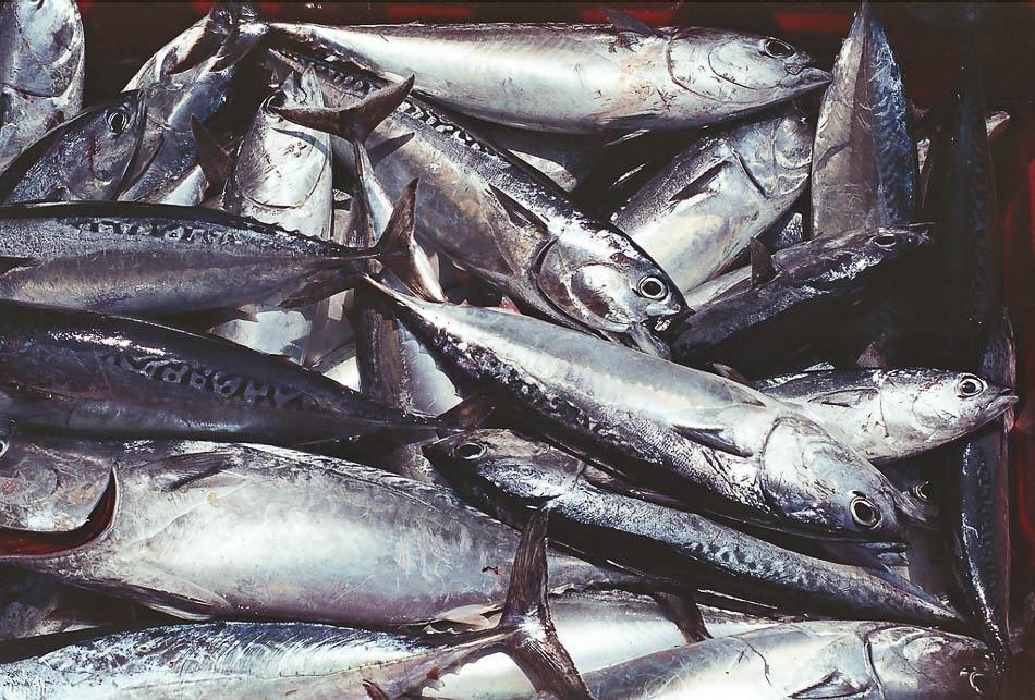 seafood crisis