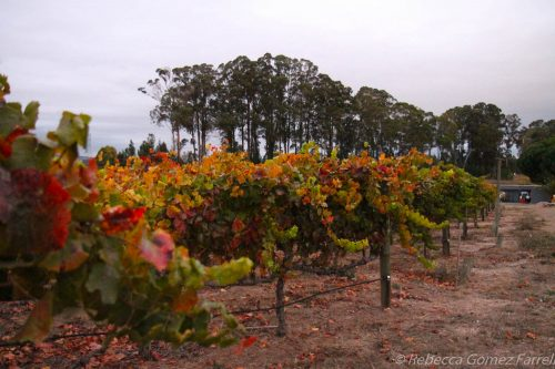 Etude winery, treasury wine estates, wine bloggers conference