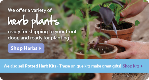Herb Plants Shipped To Your Door