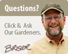 Ask Our Gardener