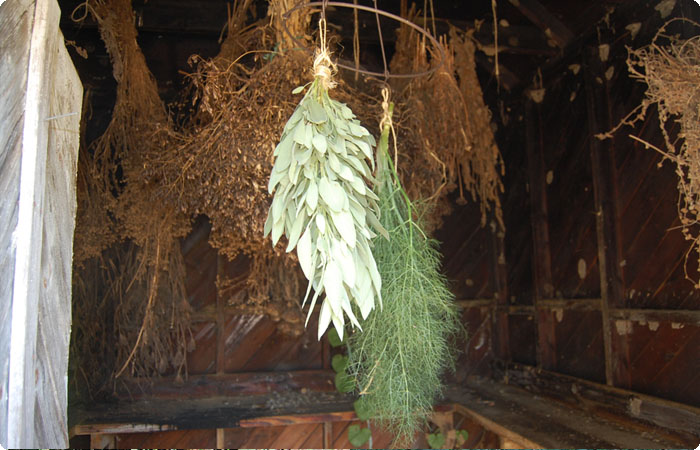 drying fresh herbs