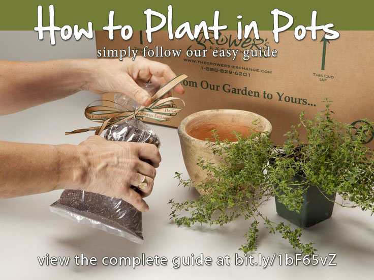 How to Plant in a Pot