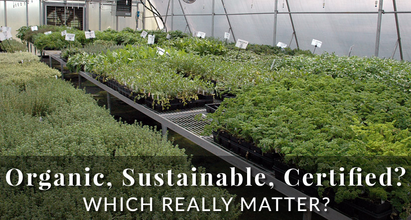 organic sustainable herb plants