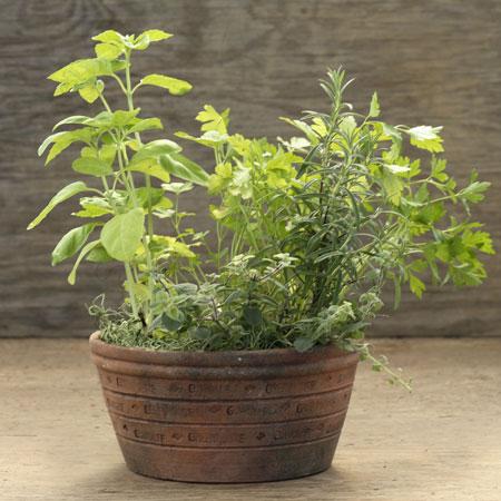 Indoor Herb Gardens Make Wonderful Housewarming Gifts | The Growers ...