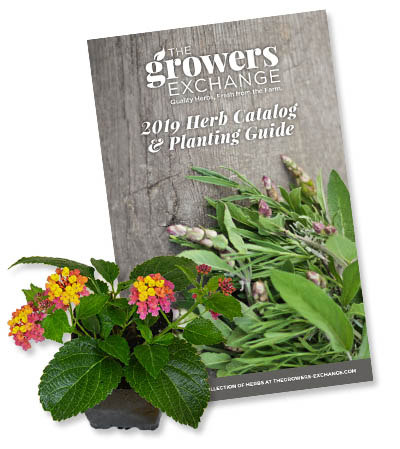 Herb Plants Catalog Subscribe