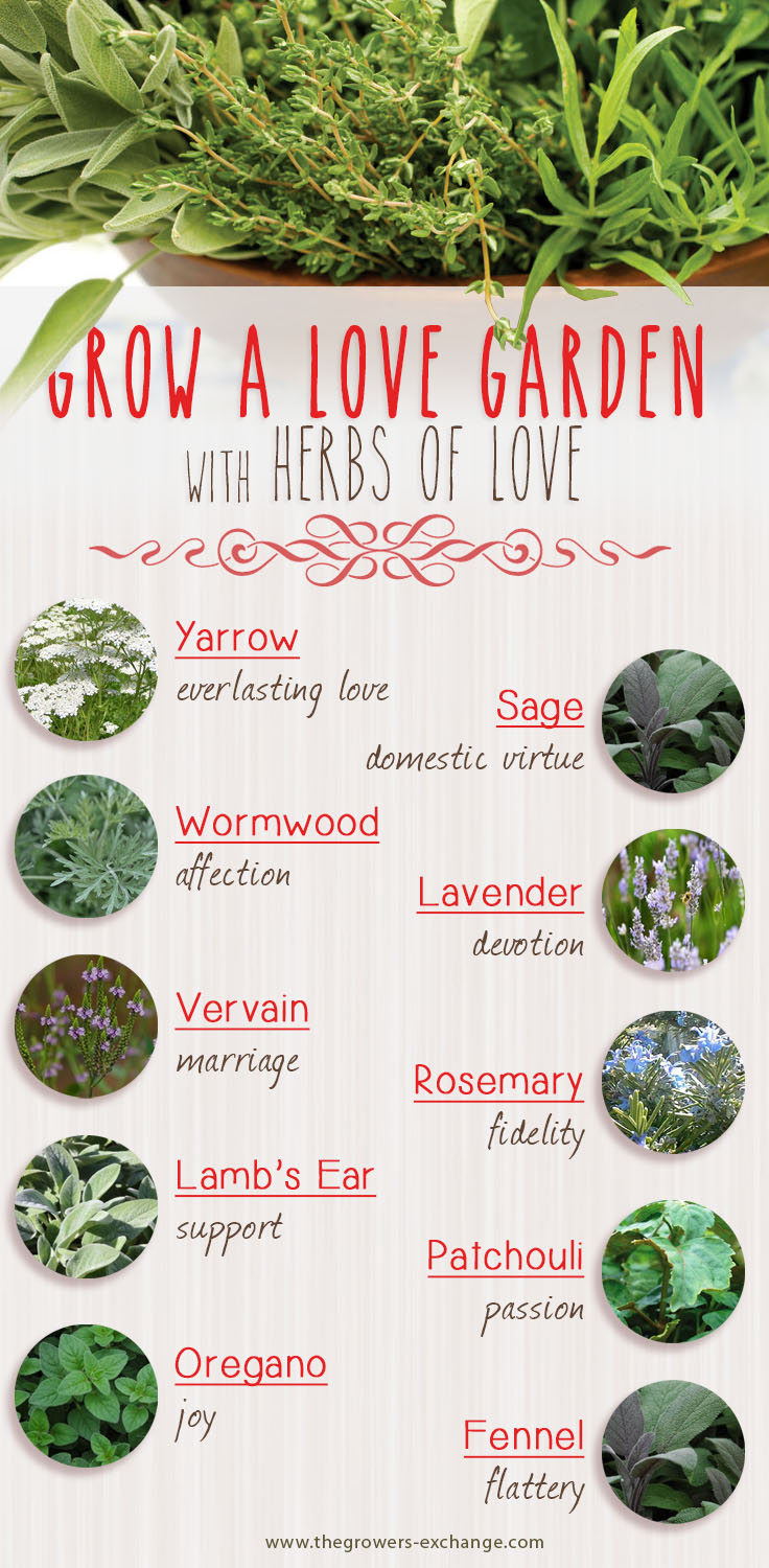 Love Herbs: Herbs that Symbolize Love