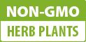 Non-GMO Herb Plants