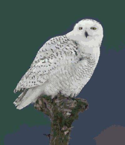 Hedwig (v2) cross-stitch chart