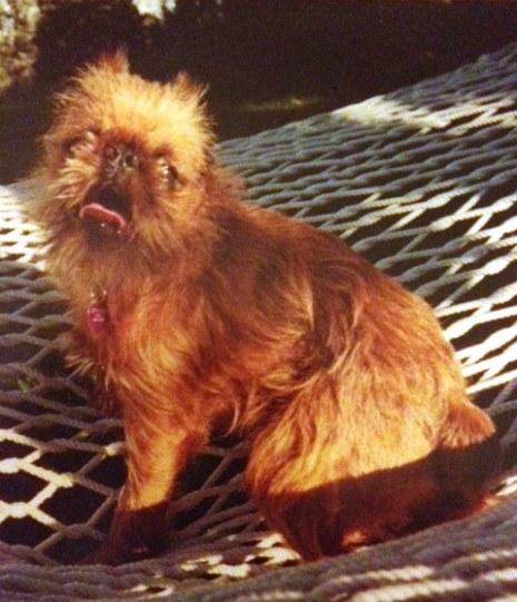 Dog 465X541