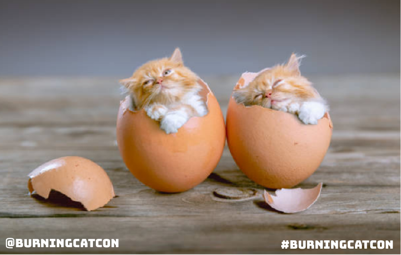 Follow @BurningCatCon