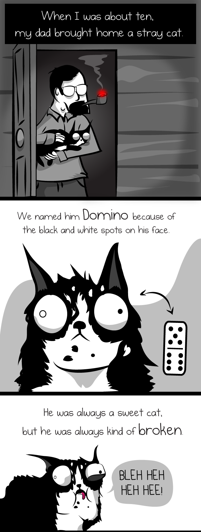 Domino the cat