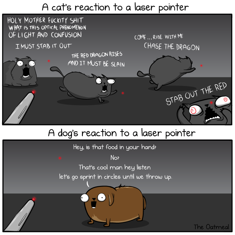 Cat and dog versus laser pointer