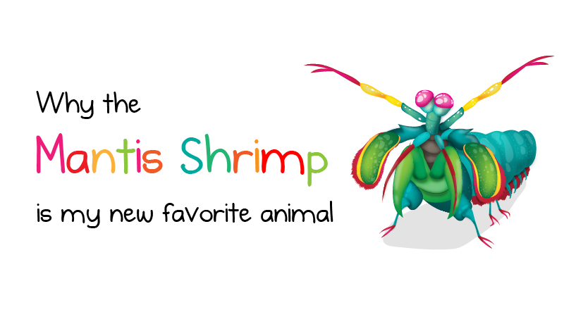 Why The Mantis Shrimp Is My New Favorite Animal  The Oatmeal A Comic About A Glorious Undersea Creature Novel Writing Help also Examples Of Thesis Statements For Narrative Essays  Online Project Development