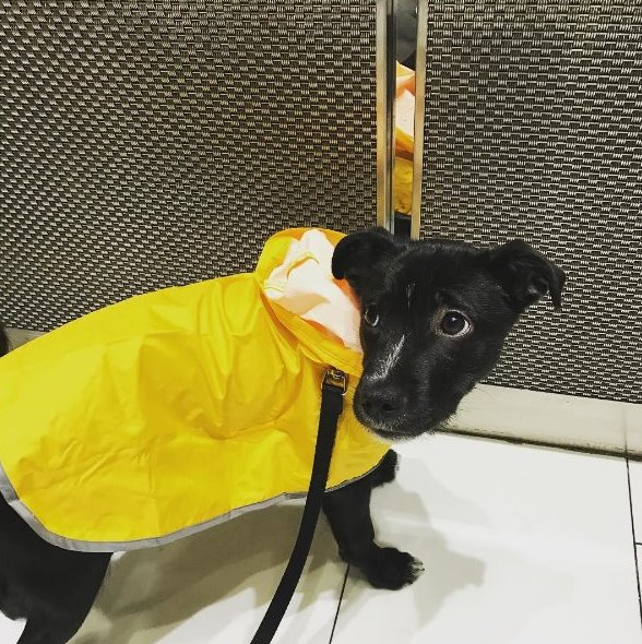 photo; Riz, company dog