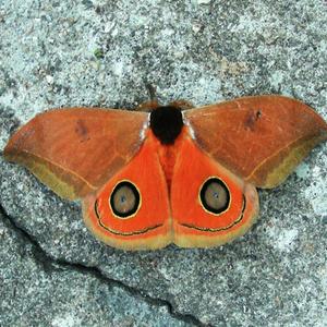 6224 moths