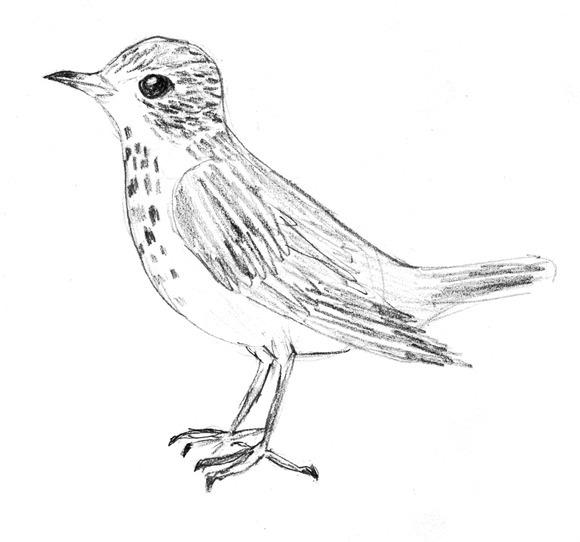 6368 birds 2