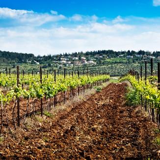 Recanati Winery Winemaker Gil Shatsberg