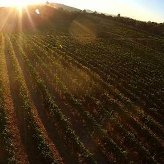 David Girard Vineyards Winemaker Grayson Hartley