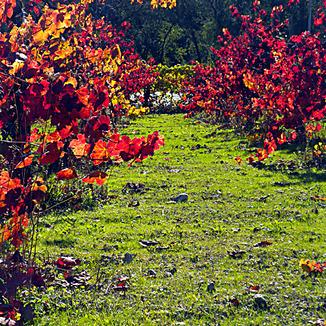 Balius Wines Winemaker Chris Buddress
