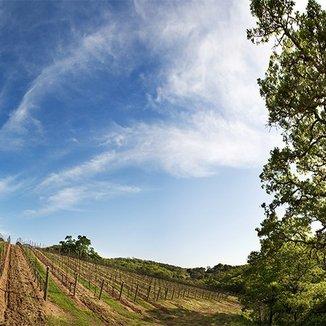 Genius Wines Winemaker Duncan Arnot Meyers