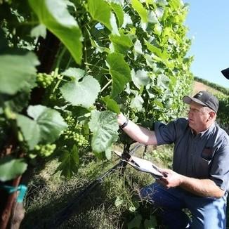 Bucher Winemaker Joe Bucher
