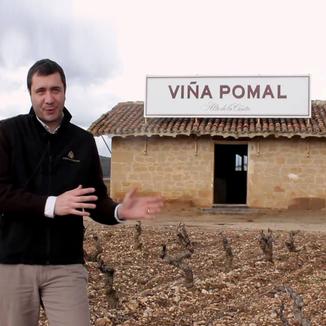 Bodegas Bilbaínas Winemaker Diego Pinilla