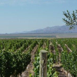 Makia Estate Winemaker Luke Branzanti
