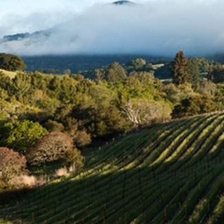 Barbed Oak Vineyards