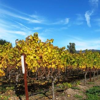Topos Wines