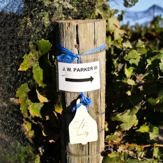 Parker Wine
