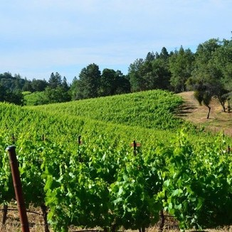 La Chertosa Wines