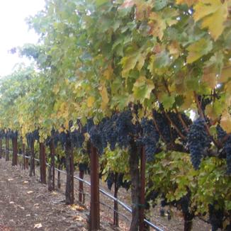 Athair Wines