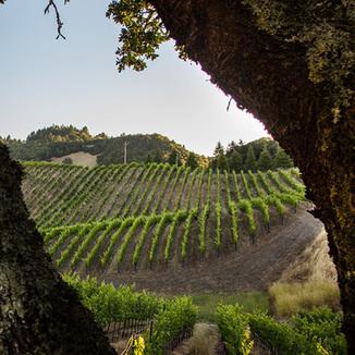E16 Wine Co.
