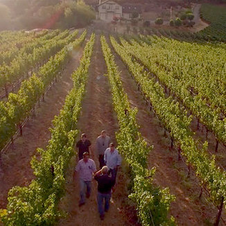 Vineyard 36