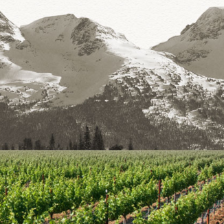 Straight Line Wines