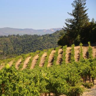 Godspeed Vineyards
