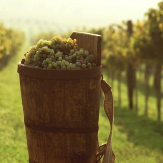 LaZarre Wines
