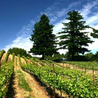 Sensorium Wines