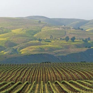 Alma Rosa Winery & Vineyards
