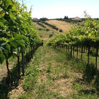 De Angelis Wines