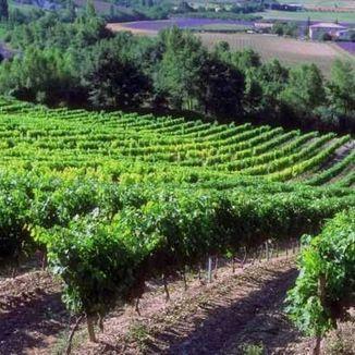 La Tarasque Wines