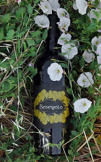 Benevolo Wines 2009 Napa Valley Red Wine 750ml Wine Bottle