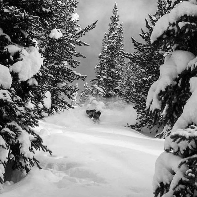 Deep trees. It's the place to be! #JanuaryBlower