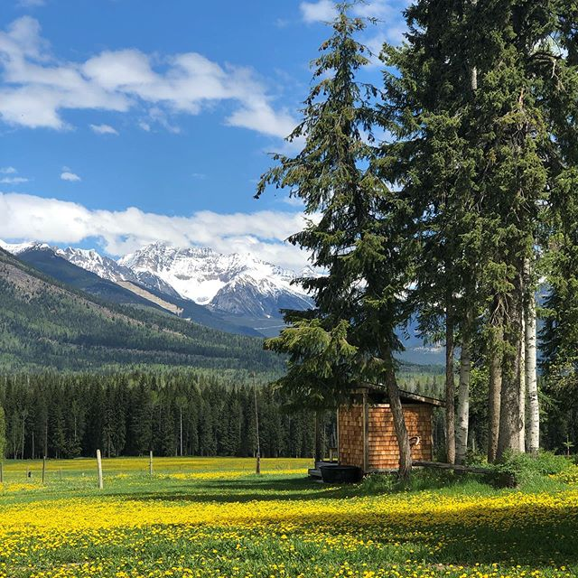 We dream of skiing the face in the distance one day, but we walk barefoot through the dandelions today. #springtime #goldenbc #feelsgood
