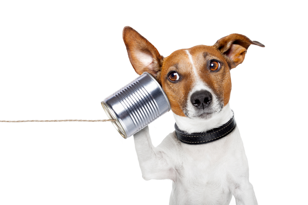 Dog With Tin Can phone
