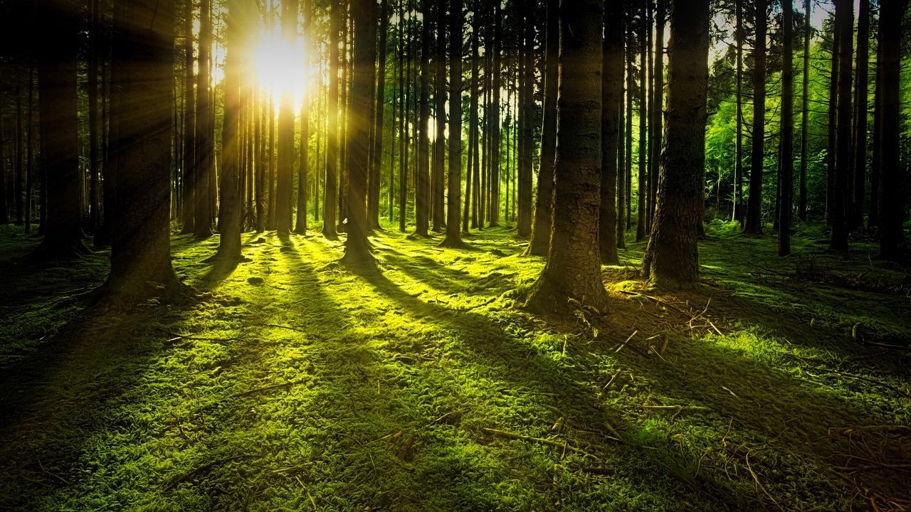 Tala med träden