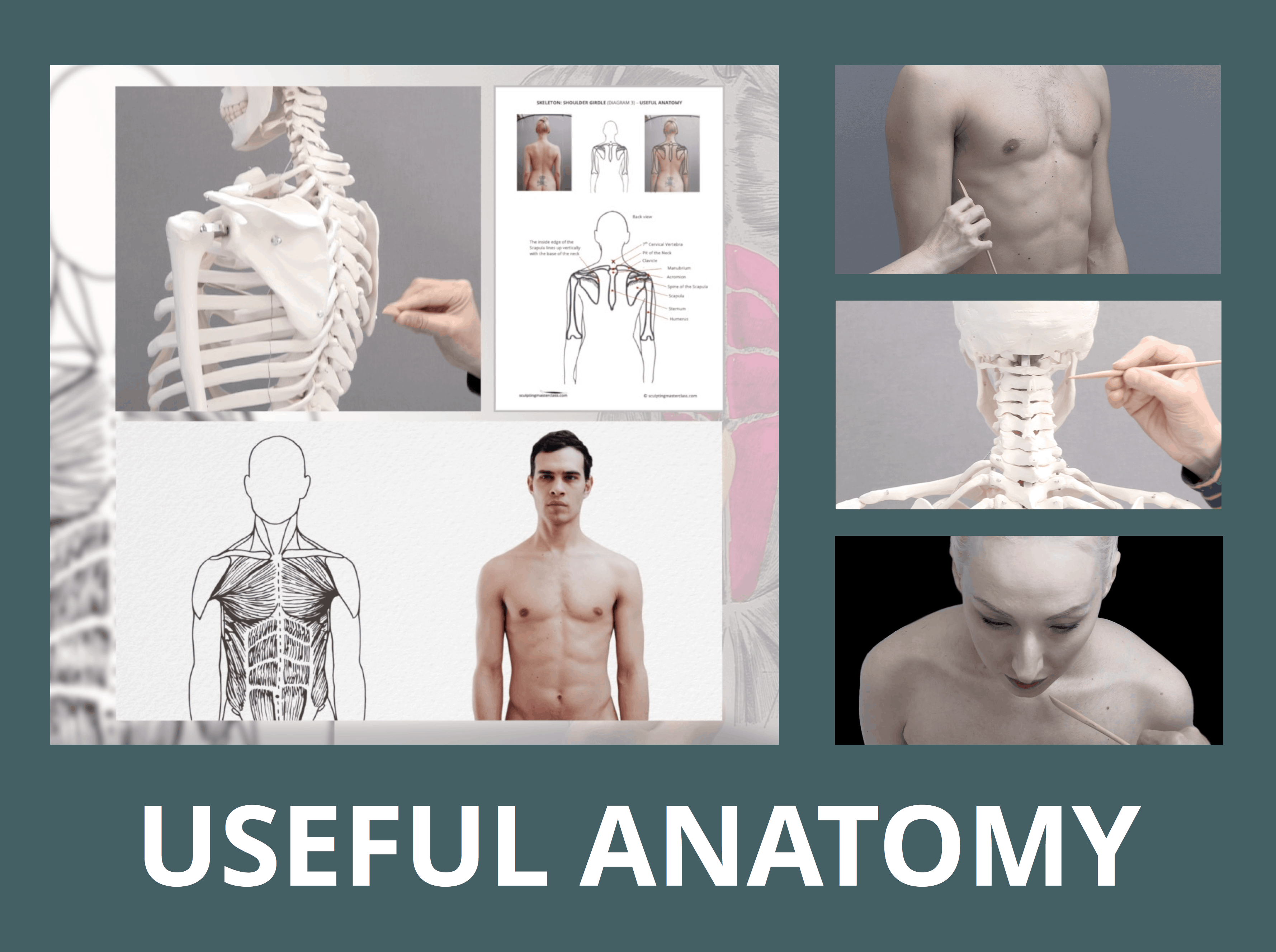 Poster Image for USEFUL ANATOMY course