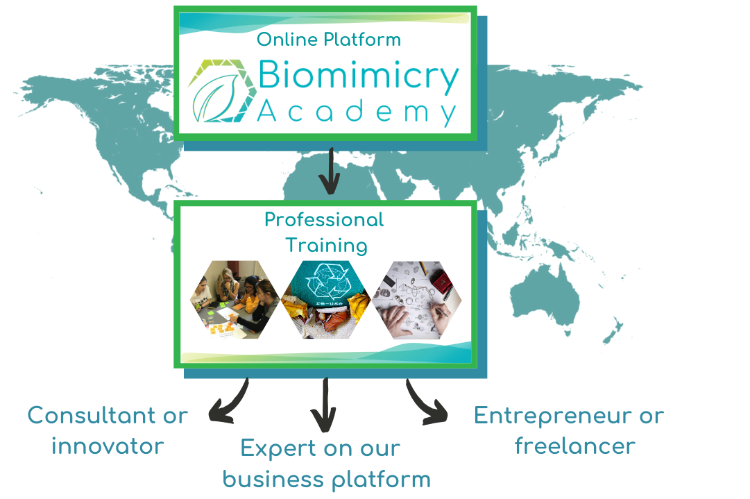 Biomimicry Academy career paths