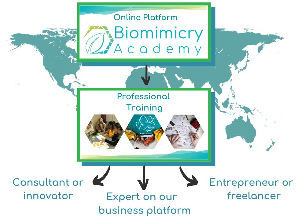 Biomimicry Academy career paths