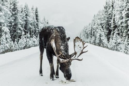 Online CORE hunter education course BC